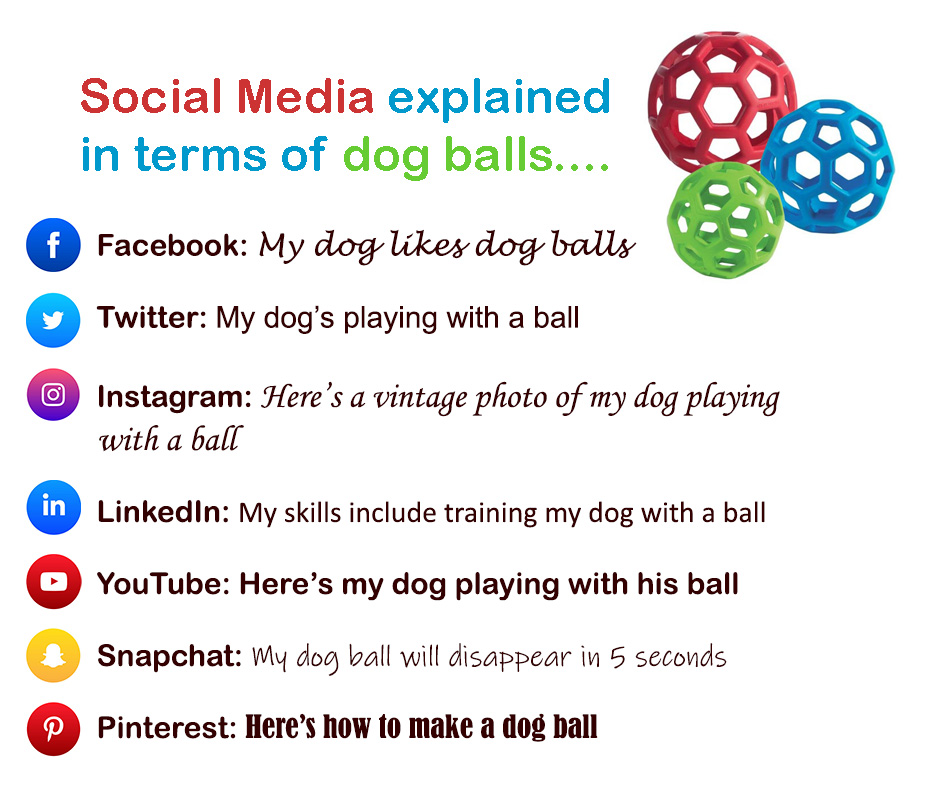 Social Media for Pet Businesses - which social media
