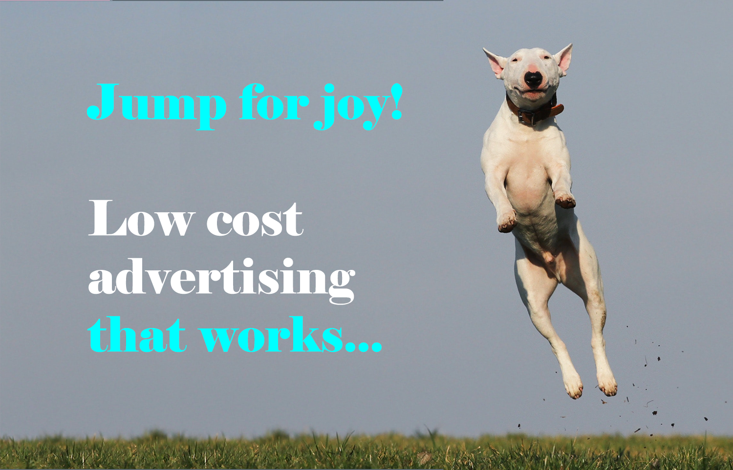 Pay Per Click (PPC) Advertising For Your Pet Business